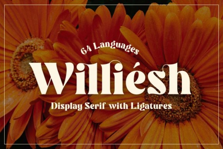 Williesh Font Download